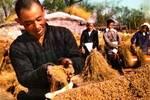 新中國初期的《人民畫報》,人民當家做主人