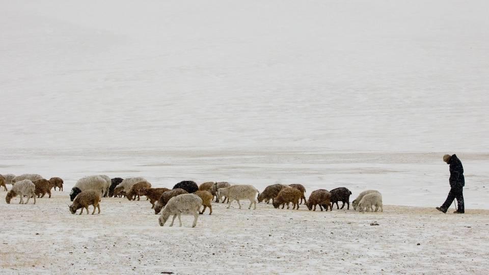 世界抗疫最好的国家是谁?暗示:与三万只羊有关