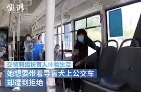 交警扮瞽者坐公交被驱赶,狗狗的反映让人心疼