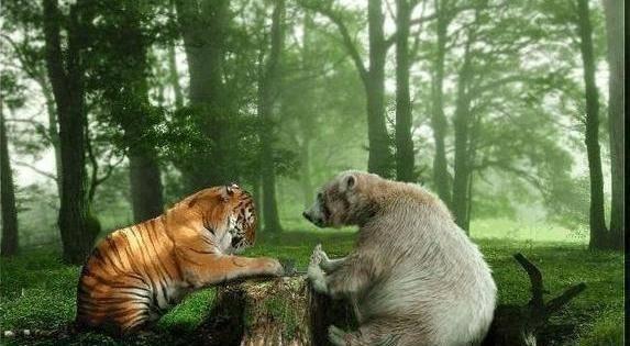至少要几头老虎才气打过一头熊?为什么?