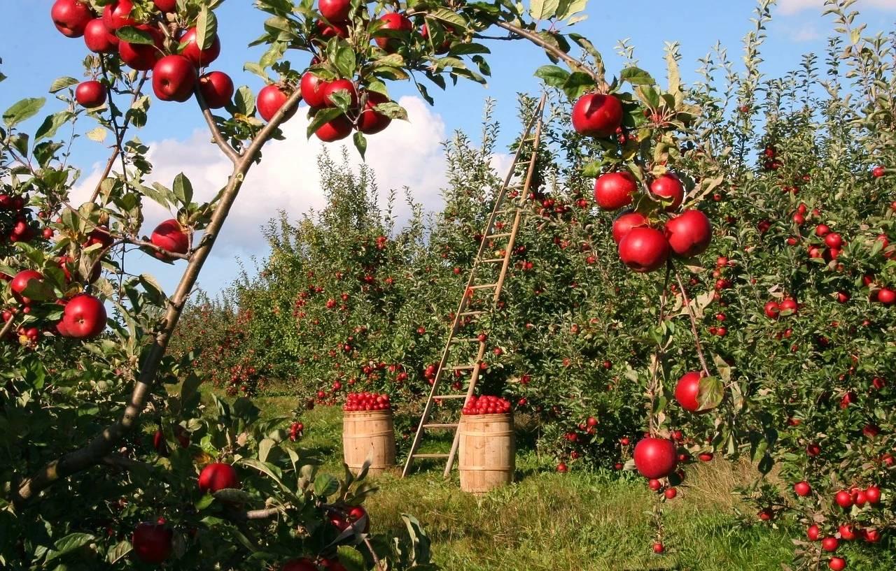 国内水果大量上市卖不掉滞销,为啥我们还要大规模进口国外水果?_庄和闲