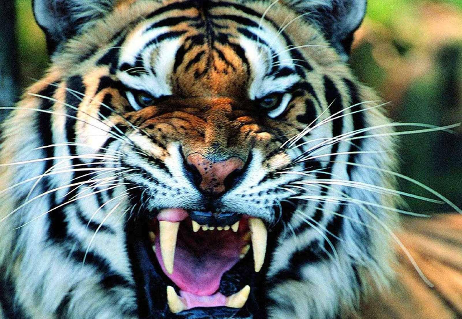 庄子说人类三种劣根性:螳螂的傲气、老虎的脾性、骏马的习气,赞
