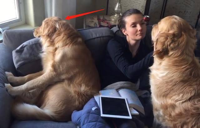 狗狗会对主人有这些特征的,不值得养,它们是养不熟的