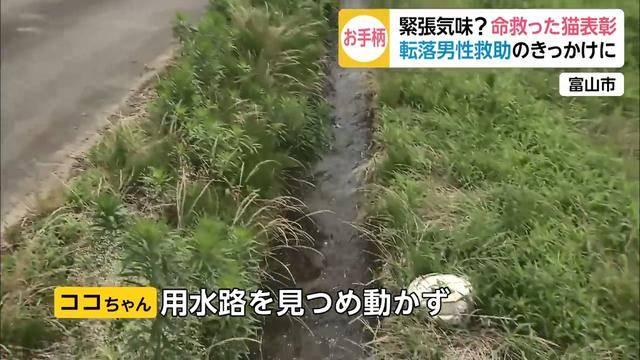 老人摔进沟里,猫咪跟路人合力救起!警察蜀黍奖励它一包猫粮