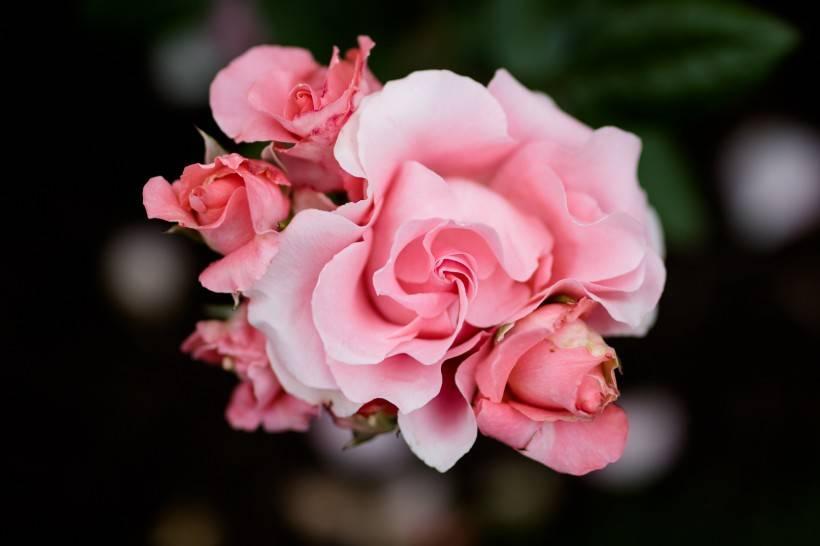 7月份挺过了爱情的波折,正桃花涌现,喜结良缘的四大生肖!