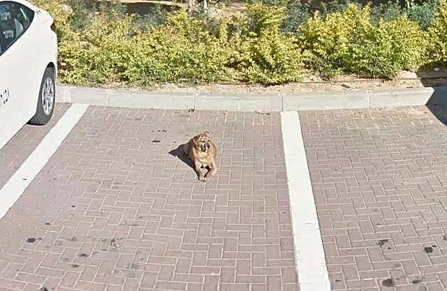 原创 狗狗去世几小时后,主人仰面看了眼天空泪目:是你在和我告辞吗?