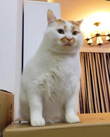 原创 猫咪长相实属怪异,主人一看它就忍不住大笑,猫咪看去瞬间懵了