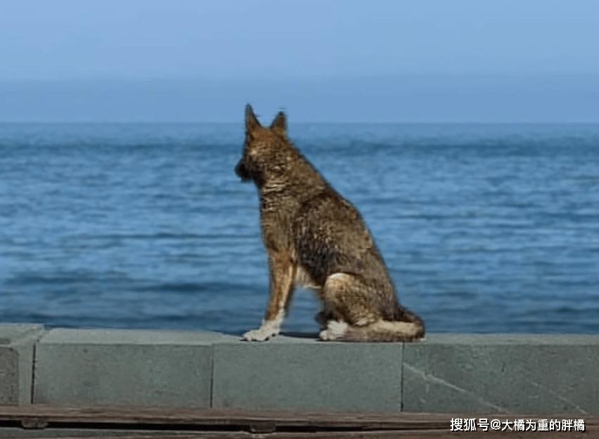 原创 主人溺水身亡,狗狗天天守在海边,结识卖艺男子,一唱一和已10年