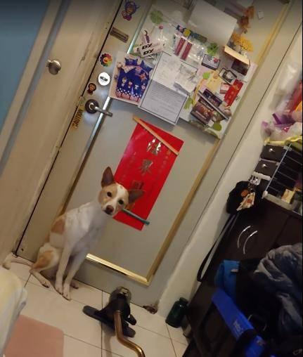 原创 主人看了一眼狗子,发现正在偷瞄门后,反映过来啼笑皆非!