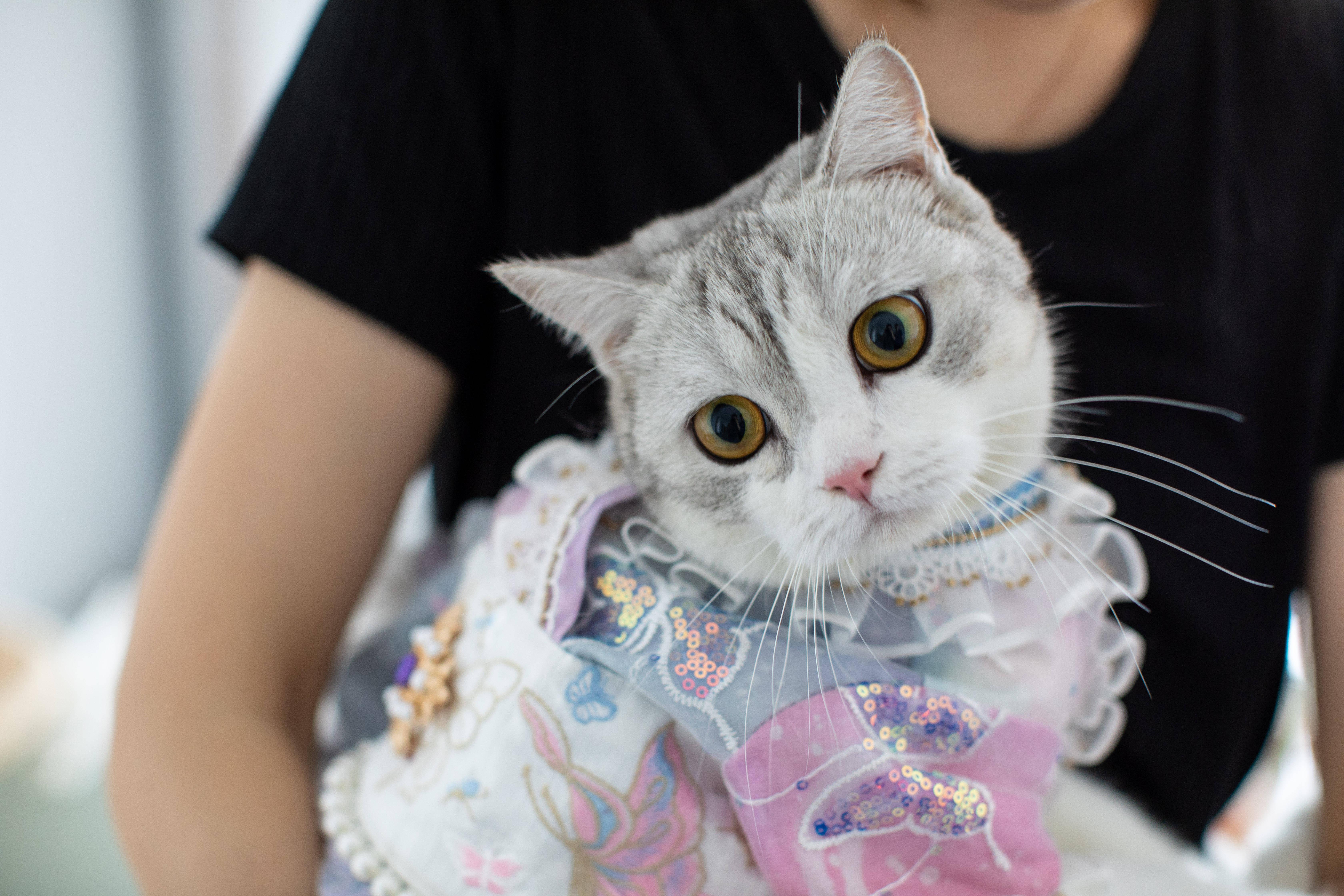 0后女孩给猫做汉服月入7万