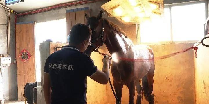 大陆马:河北马术队积极备战2021陕西全运会目标夺得奖牌