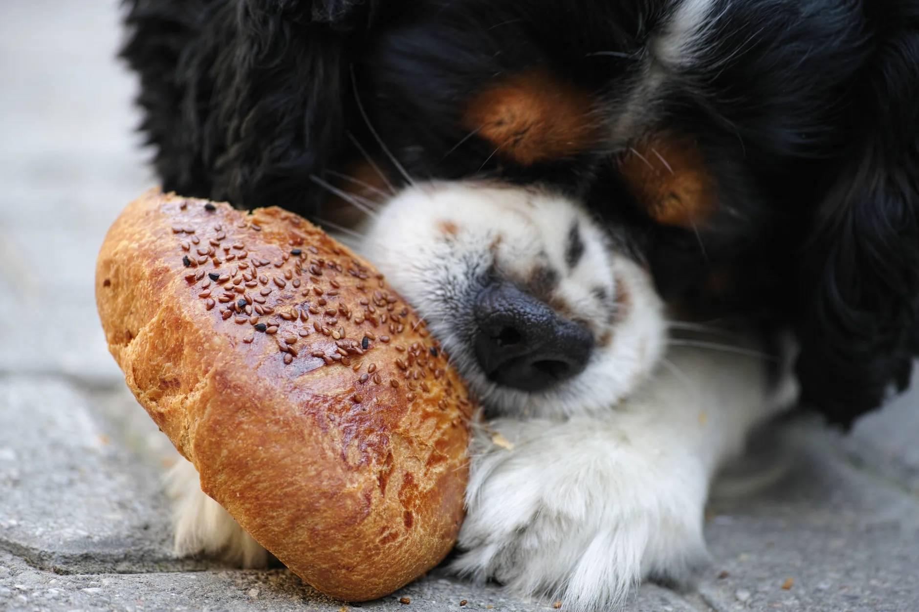 吃狗粮图片搞笑