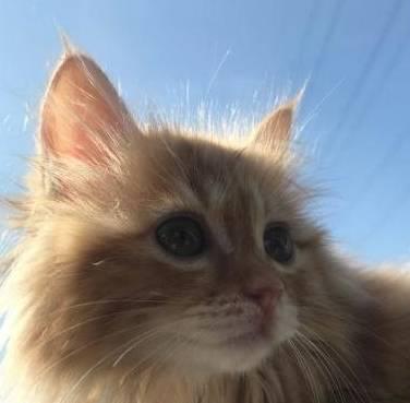 橙色的猫坐在一旁,等着