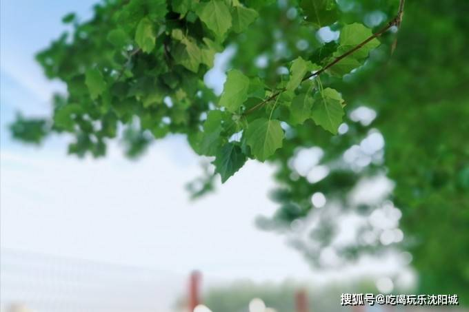 盛京游记|畅游沈阳 5处必去景点,5个城市公园,2座工业创意园区