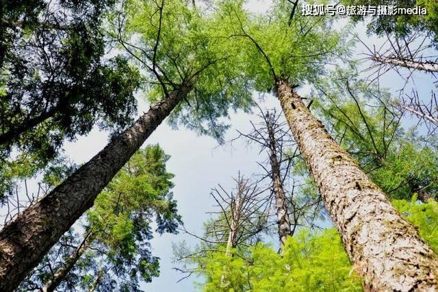 中国管理最严格的森林,连一块石头都不许挪动!原因让人心服口服