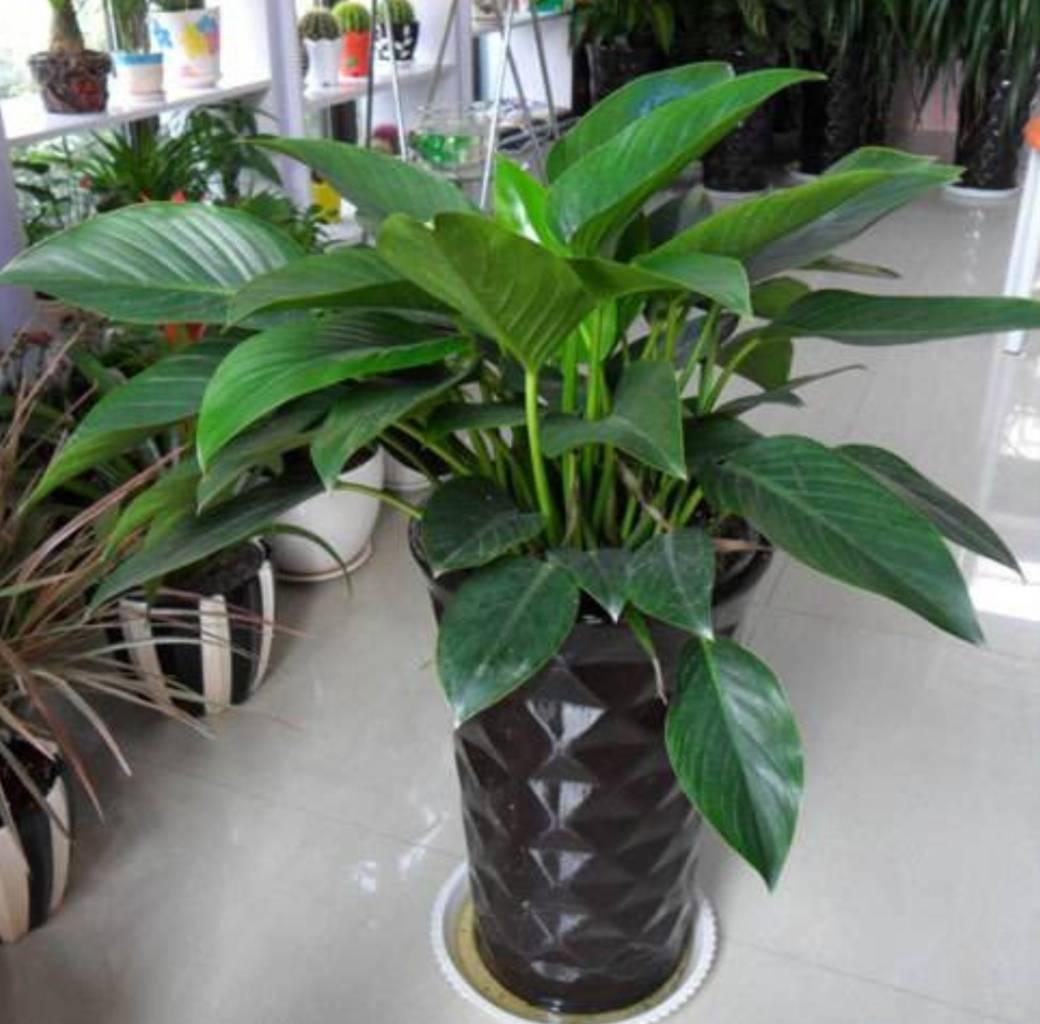 室内花卉绿植名称大全