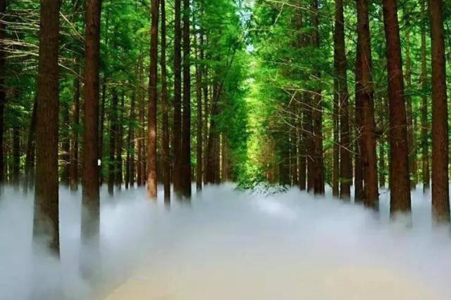 """江苏又一公园走红,距离南京2小时车程,有""""水上张家界""""之称"""