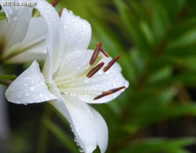 从10月份开始,桃花绽放,缔结良缘,牵手幸福的三大星座