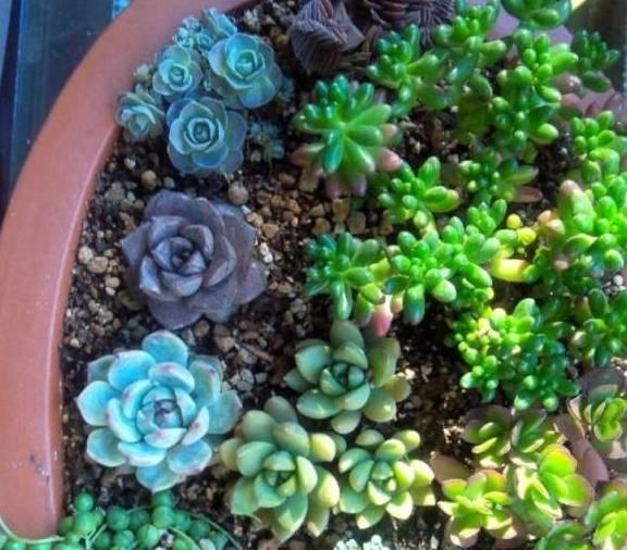 原来另有这么漂亮的拼盘植物,比着花的