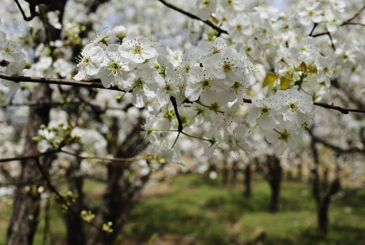 在接下来的一周里,命运和桃花都非常旺盛,幸