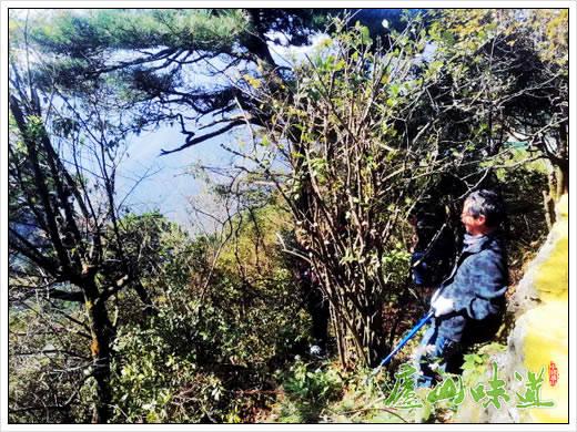庐山含鄱口景区管理所优化美化庐山景区覆盖庐山森