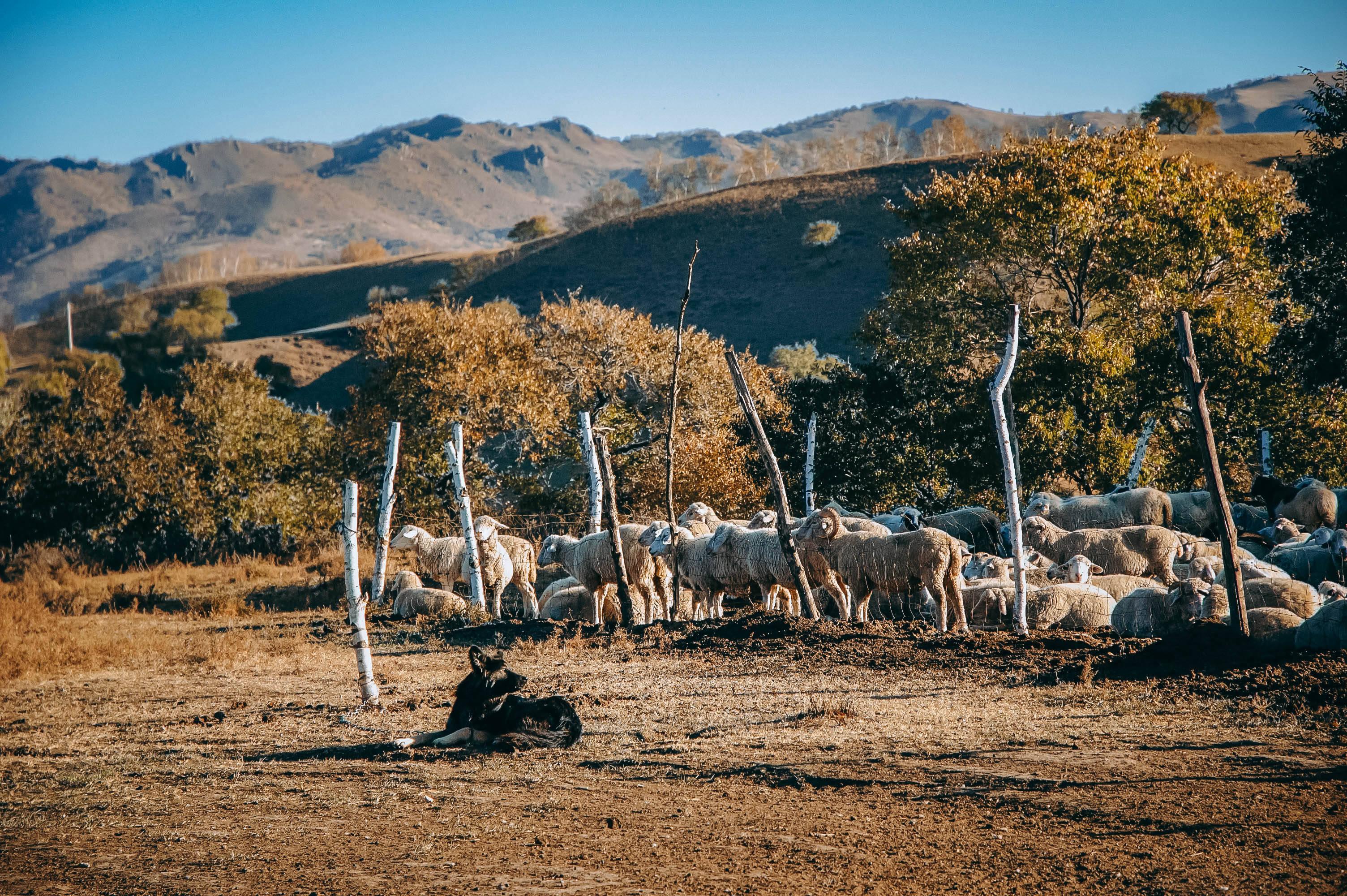 原创             蛤蟆坝,秋日最美的草原村庄,坝上的世外桃源!