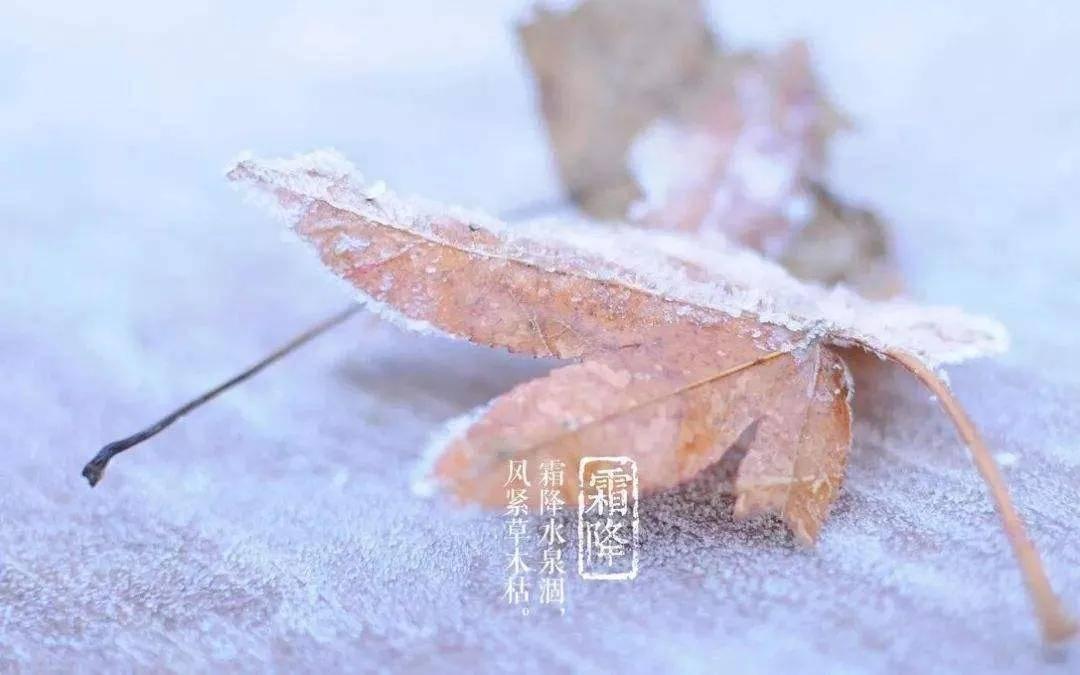"""中国艺术家陈强、李瑞峰""""二十四节气之霜降""""作品亮相纽约时代广场"""