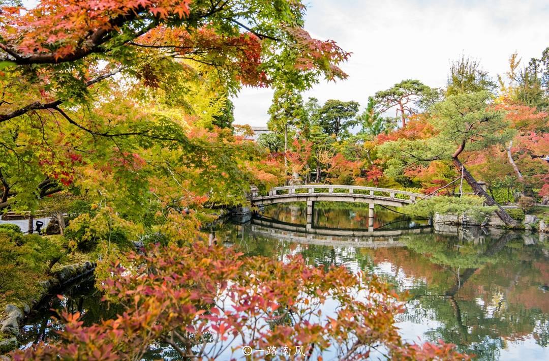 一到深秋,中国便迎来赏红叶旺季,隔壁的日本秋色又如何呢?