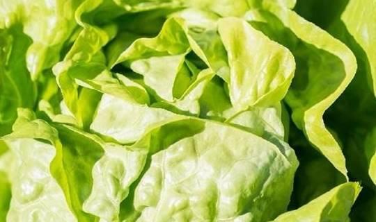 对身体最好的3种食物,值得吃一些,排毒养颜,提高免疫力