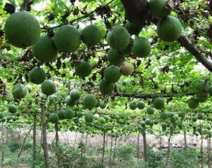 提醒:农村很常见,此不起眼的植物,竟然是抗癌奇药!