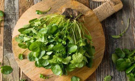 吃野菜,你是否有想过呢?别看野菜不起眼,有可能是抗癌长寿奇药