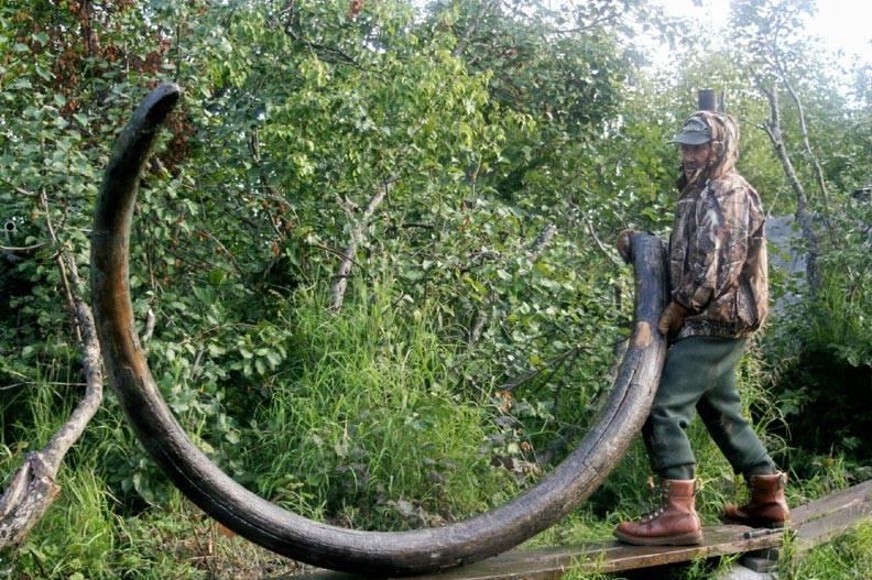 猛犸象牙的原产地在哪里,到底还有多少猛犸象牙?-藏斋珠宝文玩