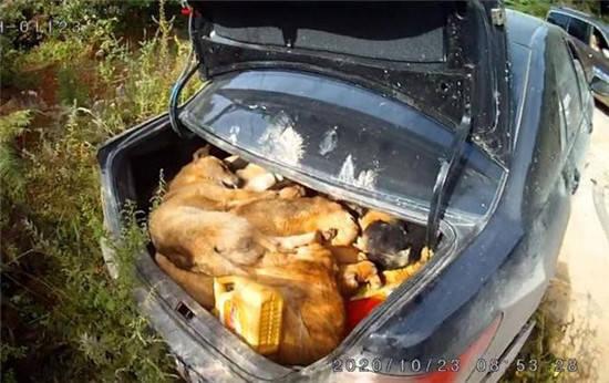 两男子为解馋毒杀10条狗引热议  目前案件正在进一步办理中