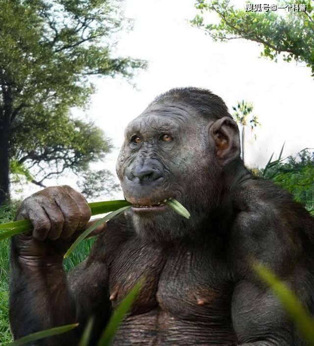在南非发现200万年前人类始祖——罗百氏傍人头骨化石