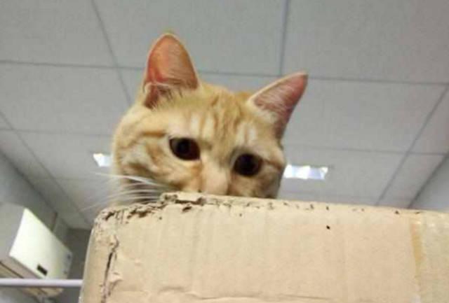 猫美容——刷牙_猫咪用刷牙吗_猫刷牙教程