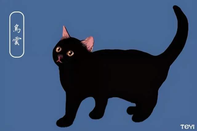 中华田园猫的品种介绍及图片图片