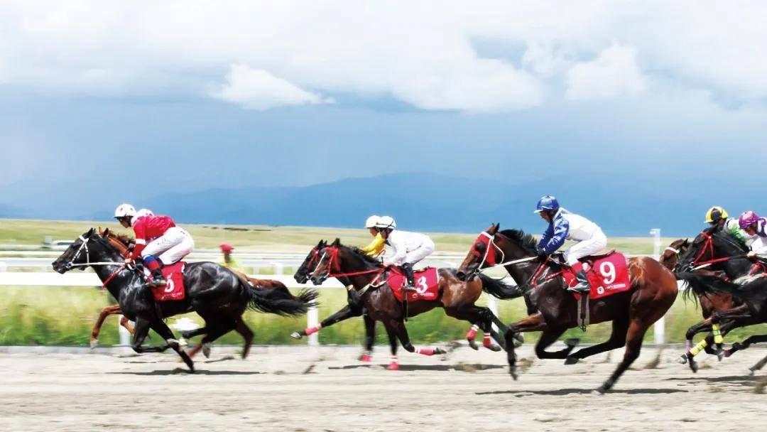 凡泰马术围栏:2021年中华民族大赛马总决赛设在新疆昭苏中国西域赛马场
