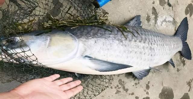 超市里这5种鱼,虽然不起眼个头小但别嫌弃,营养高可以放心买