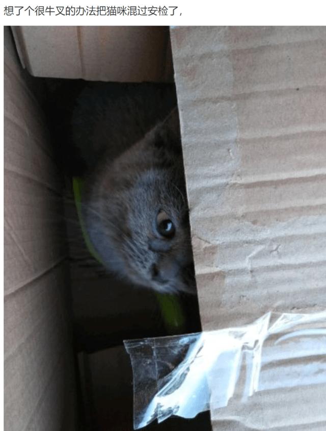 网友带猫咪坐火车,一个绝招混过安检,真是高手啊