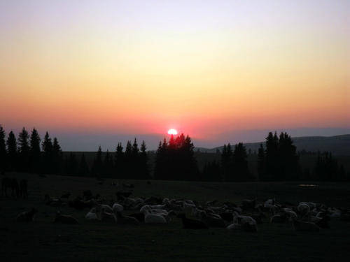 读睡诗歌|阳光洒在村庄上,风伴着马背上的新郎新娘