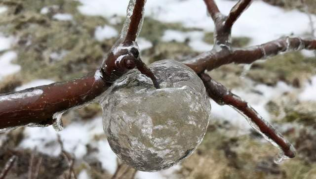 原创             梦幻冰苹果又上热搜,时隔多年依然没人知道咋弄出来的