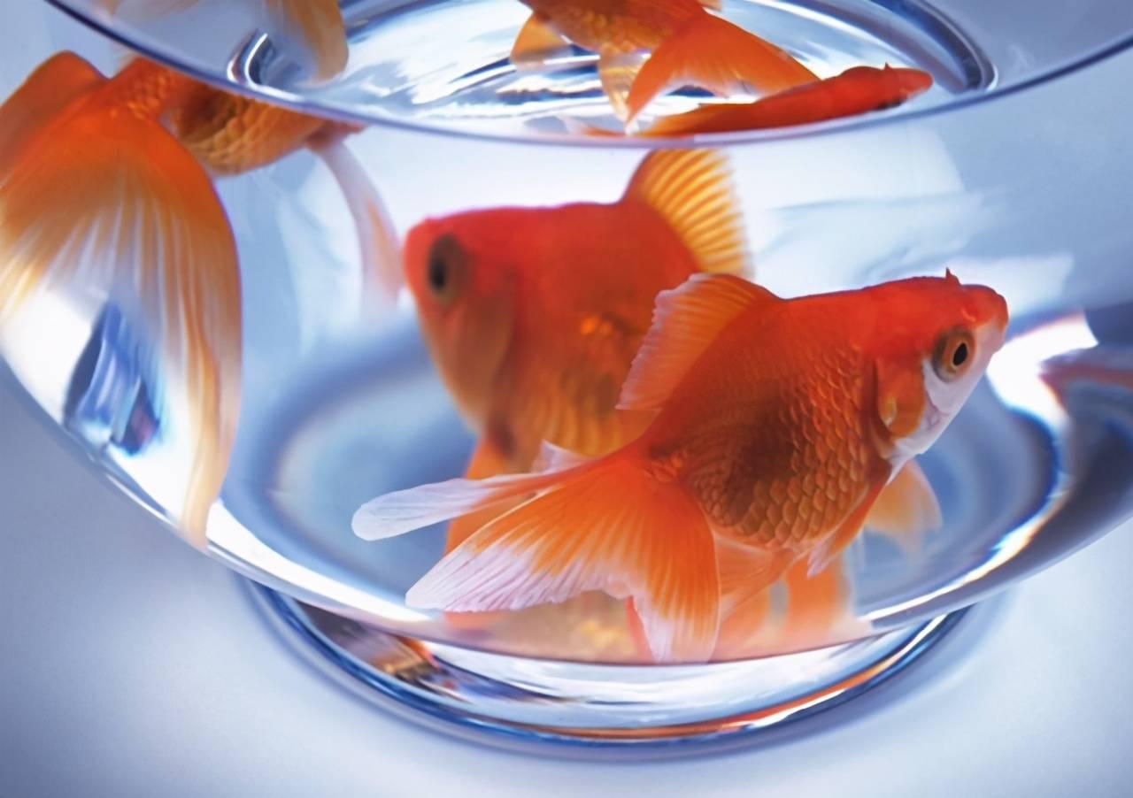 """被自己饿死的鱼:""""习惯性愚蠢"""",正在吞噬孩子的智商  第1张"""