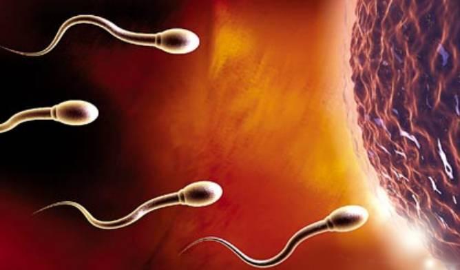 早上和晚上,到底哪个时间更容易怀孕?大多数女人都搞错了!