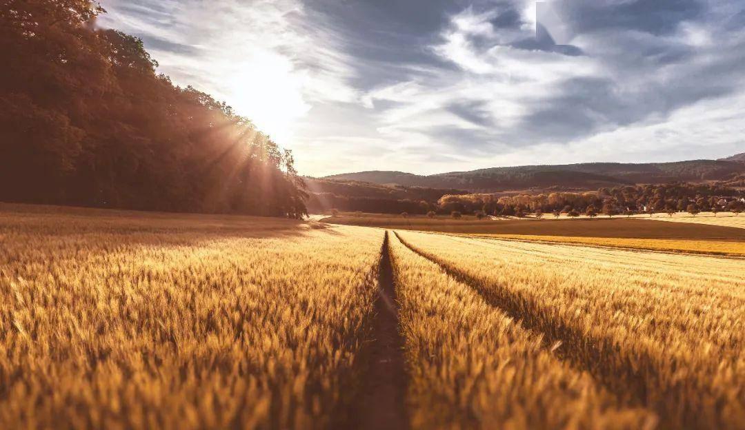 澳大利亚大麦,商务部终于出手了!