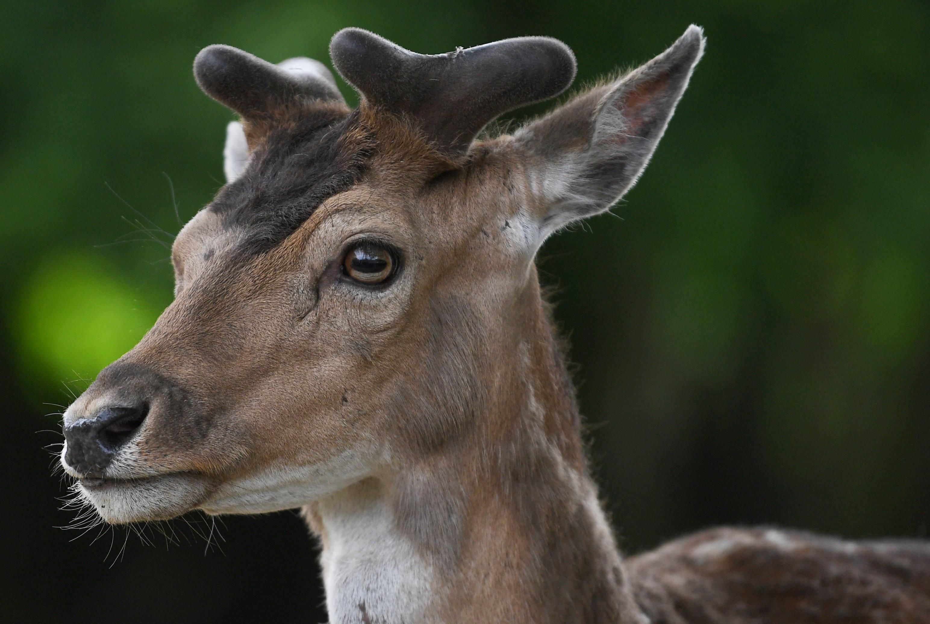 野生动物救治中心_中欧新闻_欧洲中文网