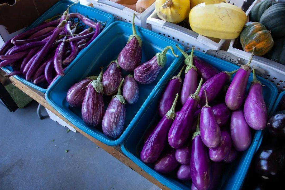 【健康科普】茄子这么吃,清热解毒、健脾宁心!