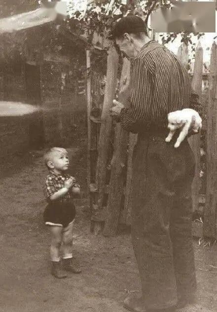 """『柯基』有一天我梦见它送给我了一只柯基……"""",""""父亲走后我经常梦见他"""
