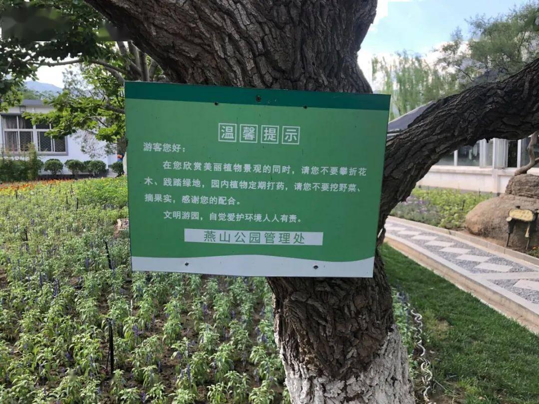 """偷摘桑葚怕中毒还报警?北京公园竟成了她的""""免费采摘园""""!"""