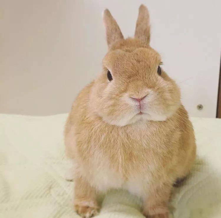 你永远都叫不动一只装聋的兔子