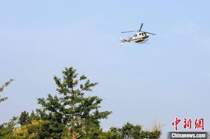 北京今年夏天对林业害虫进行飞机控制以美国白